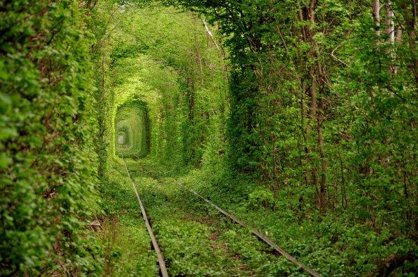Тоннель любви в Украине (8 фото)