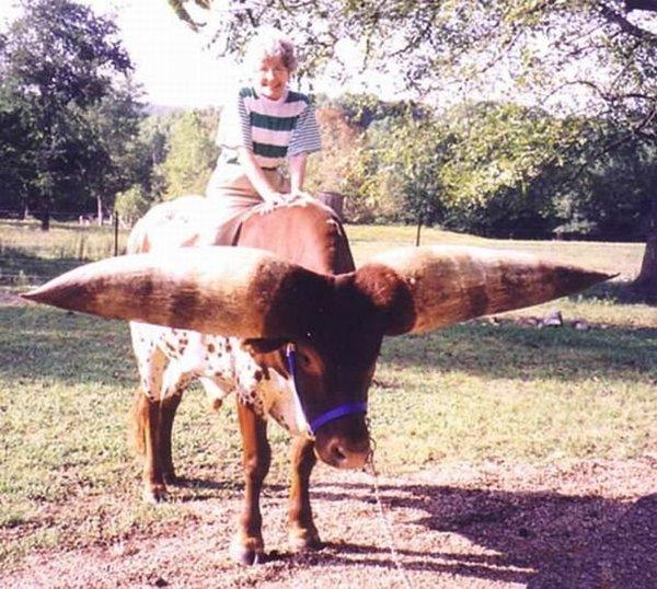 Watusi - бык с самыми большими рогами (8 фото)