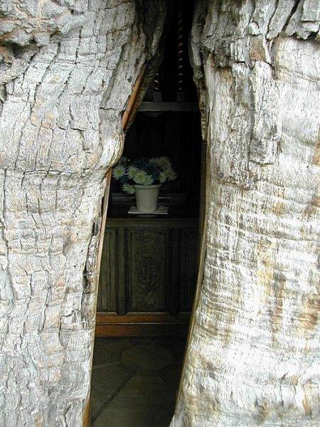 Католическая часовня внутри старейшего дуба во Франции (6 фото)
