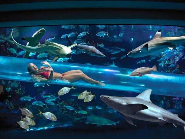 The Shark Chute: В окружении акул (фото + видео)