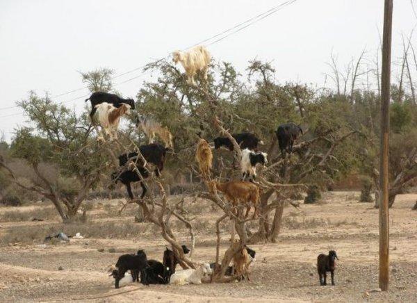 Только в Африке (20 фото)