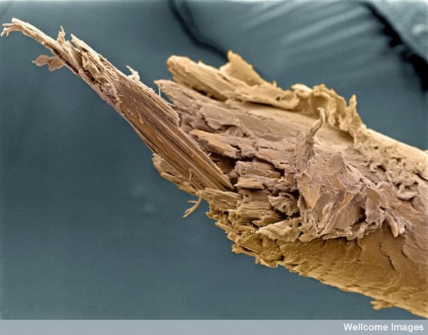 Красота под микроскопом (30 фото)