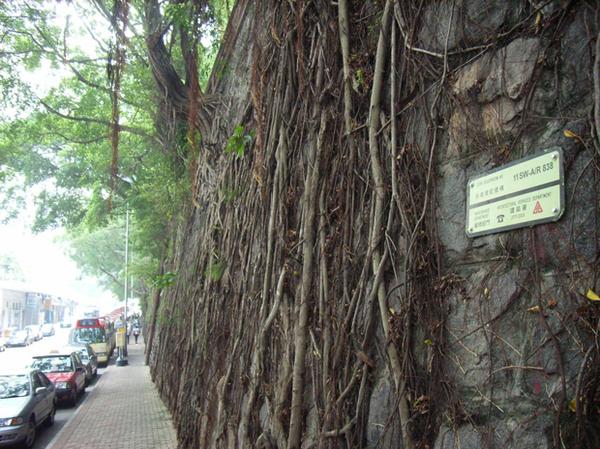 В Гонконге деревья растут из стен (6 фото)