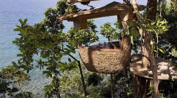 Ресторан на вершине дерева (8 фото)