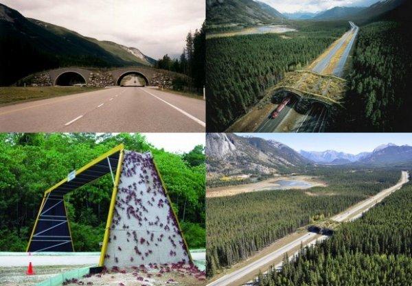 Существуют мосты для животных (12 фото)