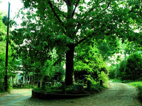 Существует дерево, юридически владеющее собой и 2,5 м земли вокруг
