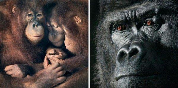 Фотогорафии животных от Тима Флака (29 фото)