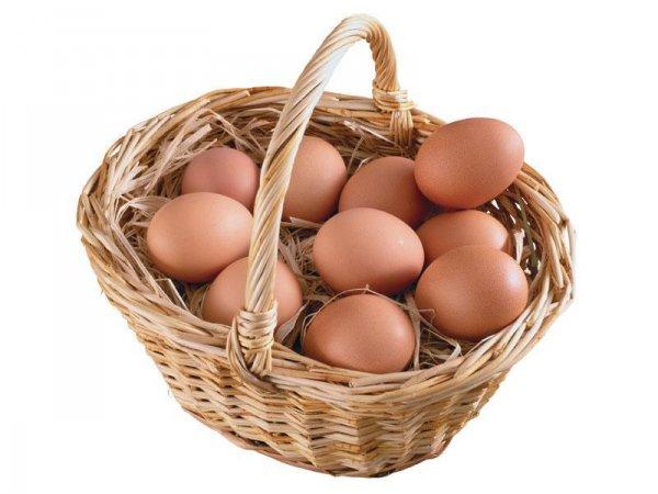 Птенцы способны слышать до того, как вылупятся из яица