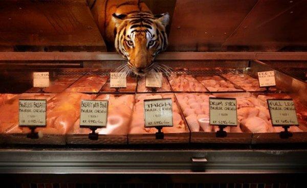 Животные в супермаркете (9 фото)
