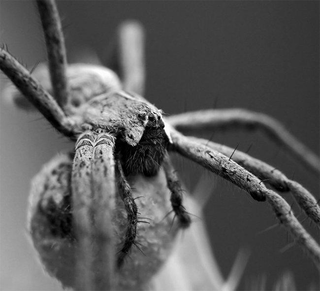 Как пауки предсказывают погоду