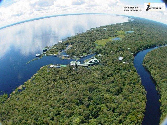 4 Самых удивительных в мире отеля на верхушках деревьев (10 фото)