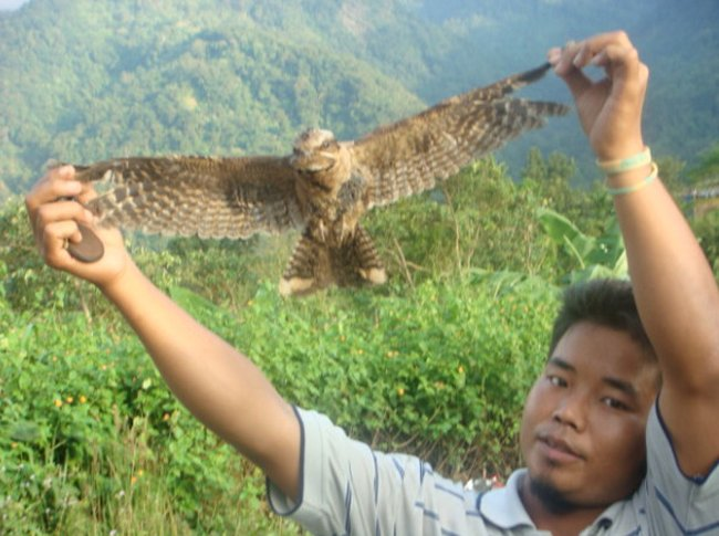 В Индии есть деревня, где птицы постоянно совершают самоубийства