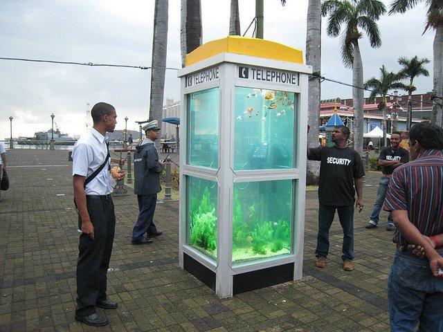 Аквариумы с экзотическими рыбками – из телефонных будок (9 фото)