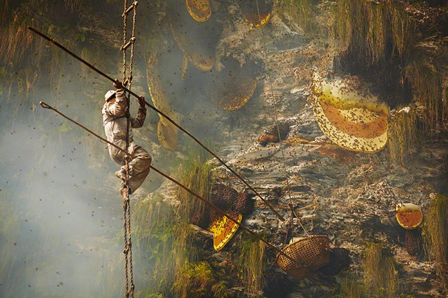 Сбор дикого мёда в Непале (11 фото)