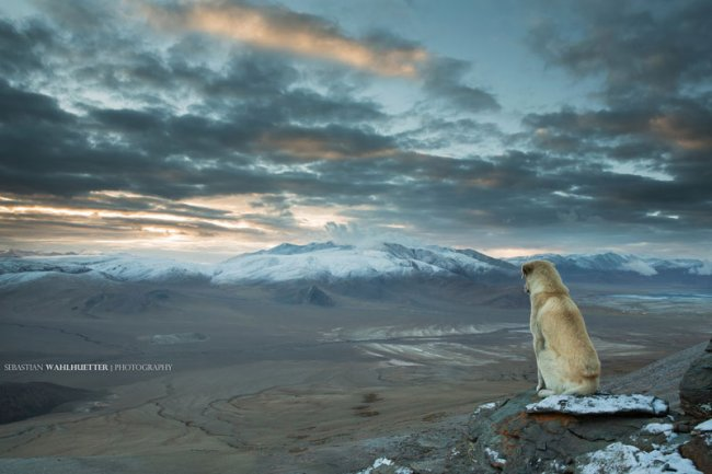 Фото дня 12.04.2014 - Собака в Гималаях