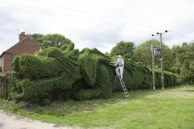 Джон Брукер 10 лет строил изгородь-дракона (7 фото)