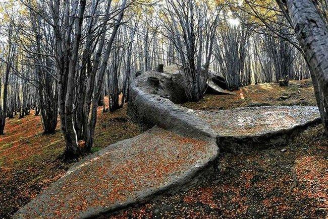 Скульптура кита в аргентинском лесу (3 фото)