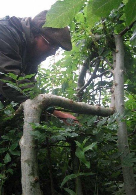 Мебель, выращенная из дерева (9 фото)
