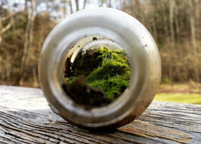 Миниатюрный мир внутри бутылки (фото дня)