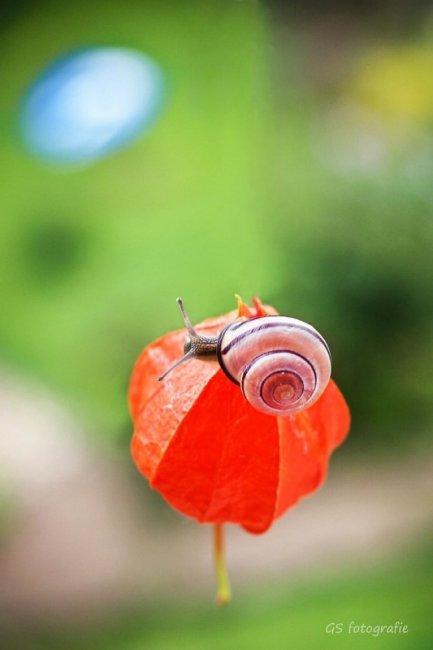 Фотосессия улиток от Габи Стиклер (18 фото)