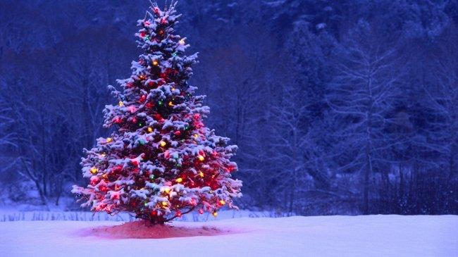 Почему именно ёлку украшают на Новый год?