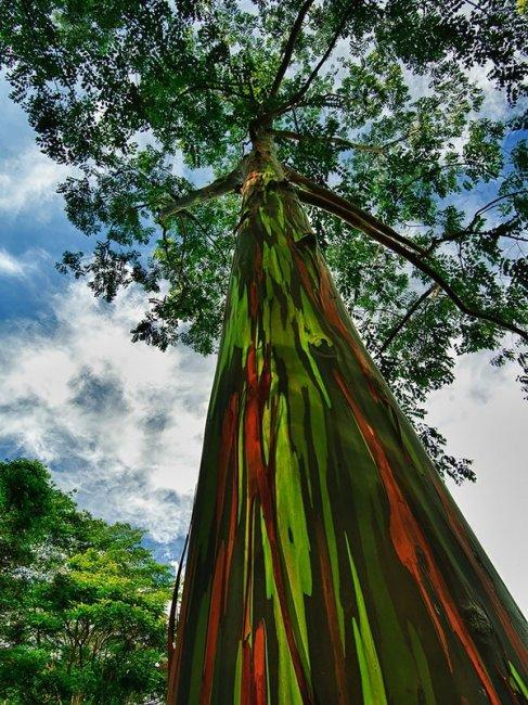 10 необычных деревьев (10 фото)