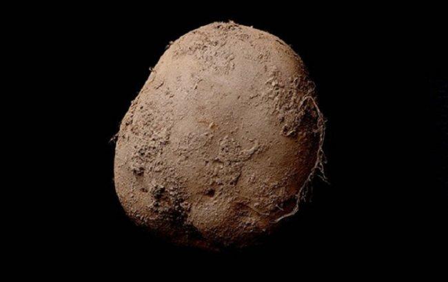 Картофель за 1 миллион долларов (фото дня)