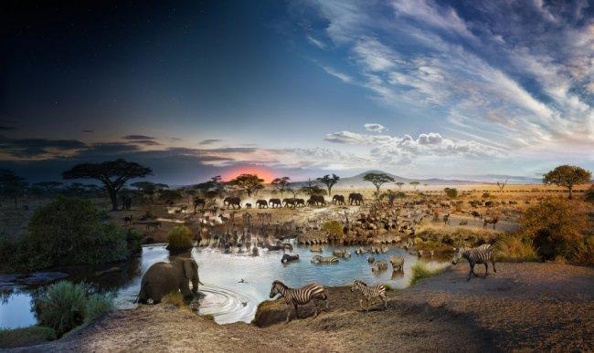 Фото различных животных у водоема в течение 26 часов (фото дня)