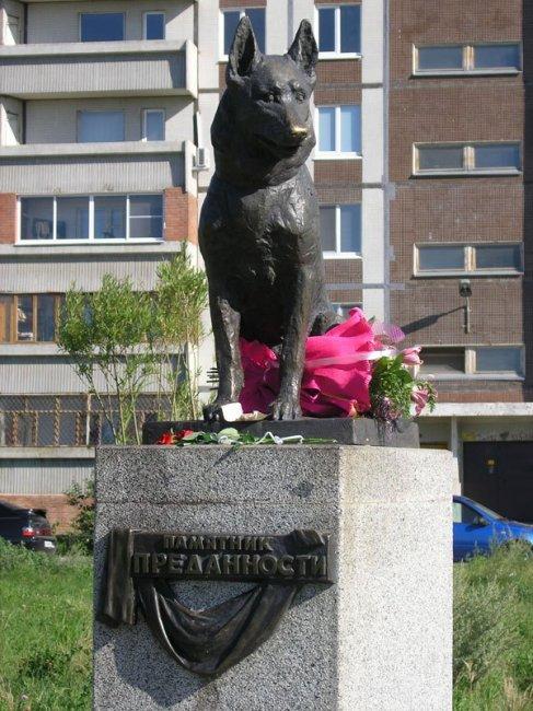 7 лет пес из Тольятти ждал своих хозяев на одном и том же месте (3 фото)