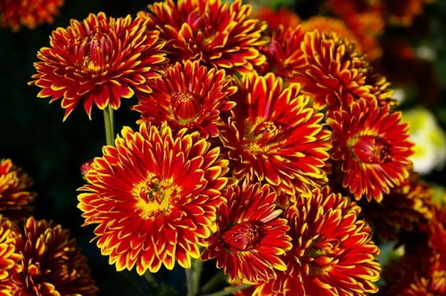 Интересные факты о цветах (13 фото)