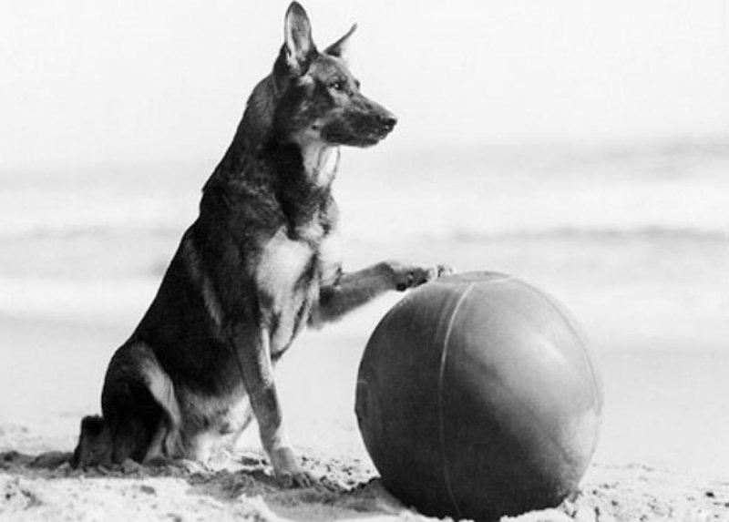 Статья про собаку