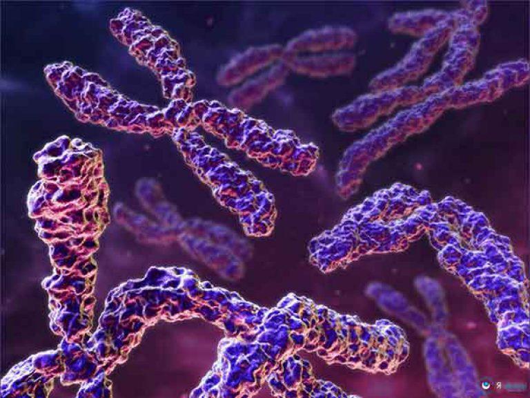Доступным языком о ДНК, хромосомах и кариотипе