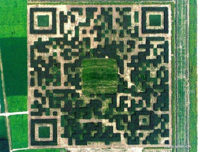 QR-код из 130 тысяч тщательно подстриженных кустарников и деревьев, который можно просканировать с воздуха