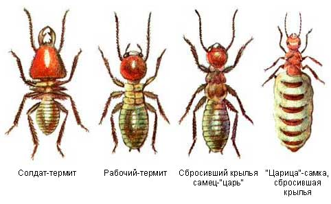 Невероятные факты о муравьях (9 фото)