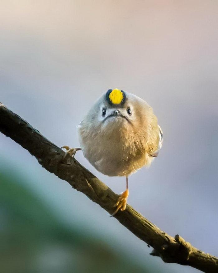 Картинки птицы с приколами, любимым прикольные