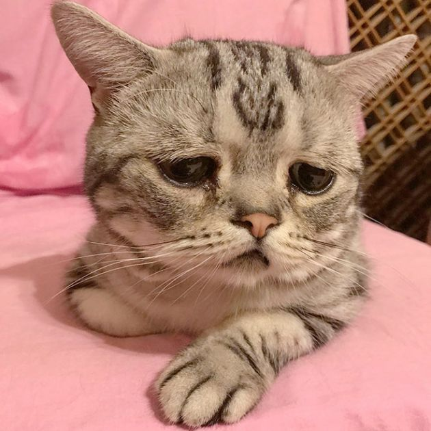Самый грустная кошка на Земле (12 фото)
