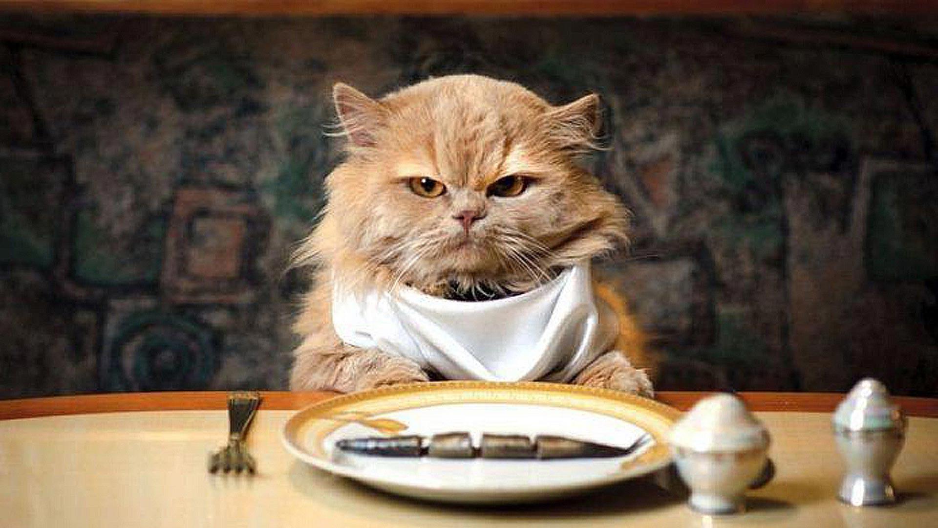 Прикольные картинки животные еда, видео открытки