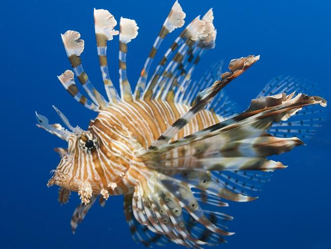Самые необычные рыбы мира
