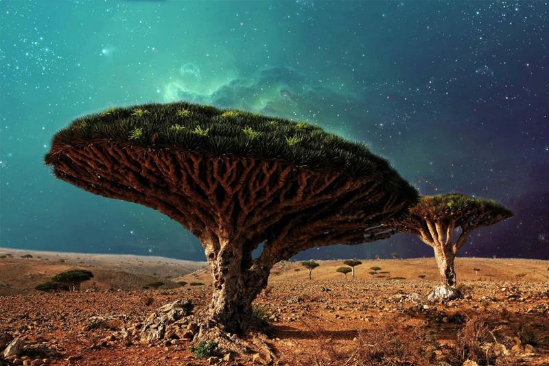 Фото дня: Дерево Кровь Дракона