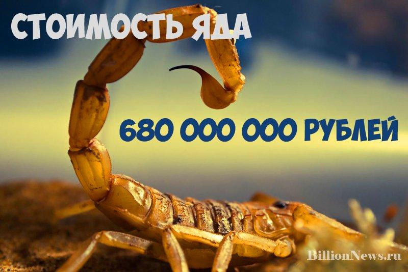 Самая дорогая жидкость в мире - яд желтого скорпиона