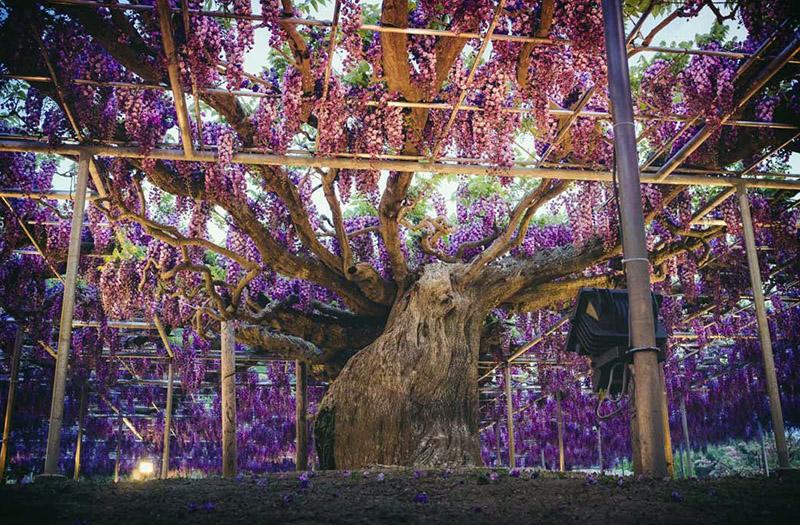 Необычные деревья планеты