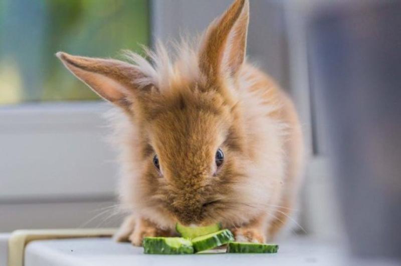 Что будет с зайцем, если кормить его как вегетарианца
