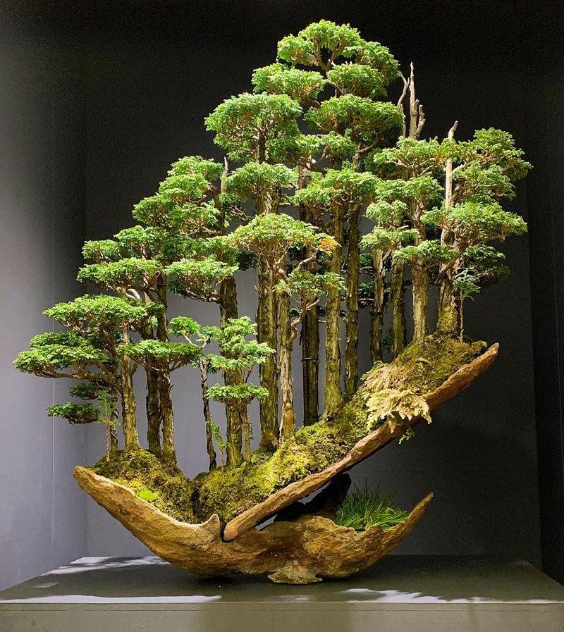 Невероятный лес бонсай от Масахико Кимура (фото дня)