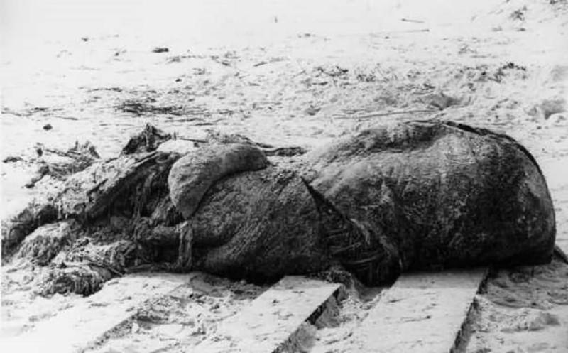 Неразгаданная тайна 20 века: труп гигантского волосатого монстра в Австралии