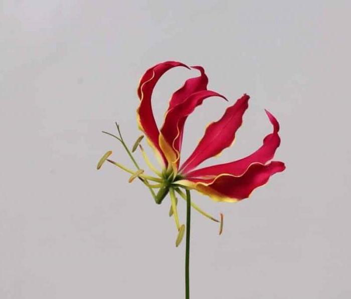 Необычные цветы для букета
