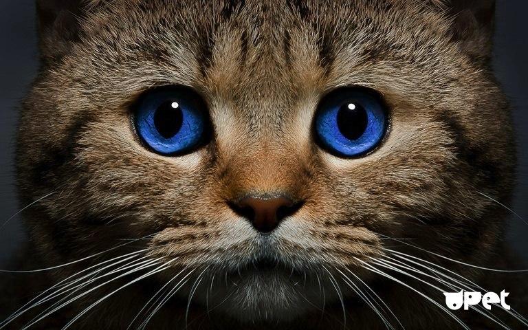 ХПН у кошек – что это такое