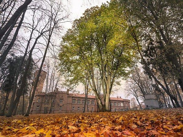 15 деревья в Европе с  интереснейшей историей