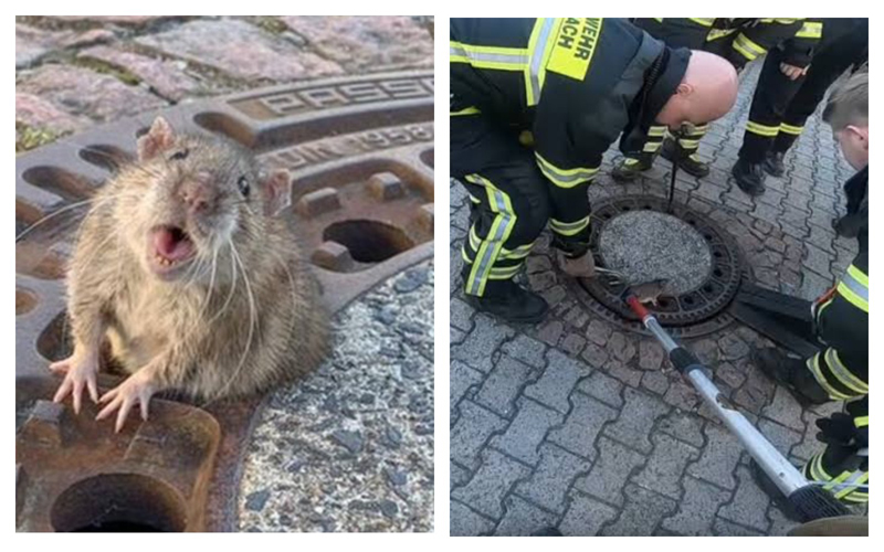 В Германии 8 спасателей спасали крысу
