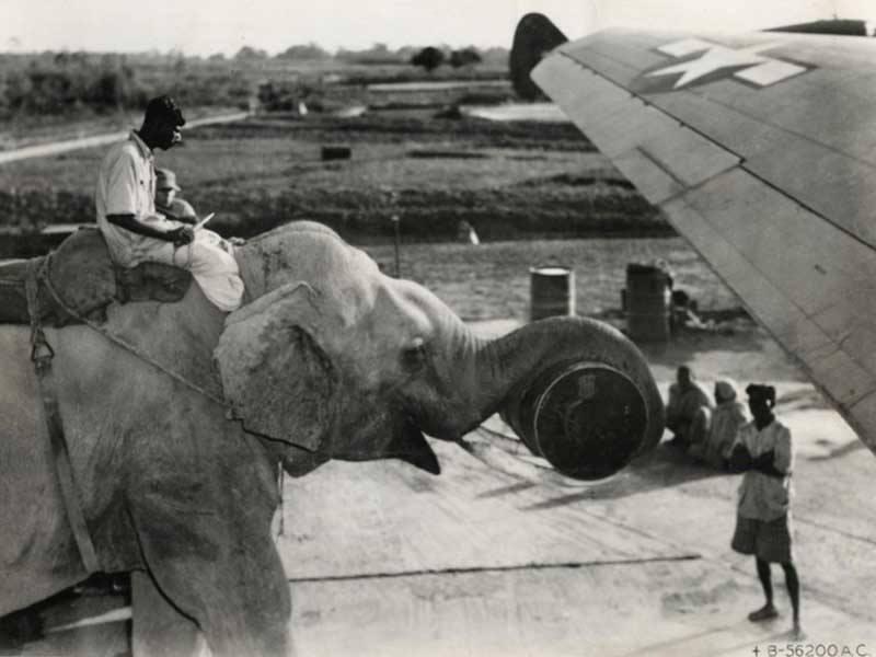 Слон помогает загружать продовольствие в американский самолет в 1945 году. (фото дня)