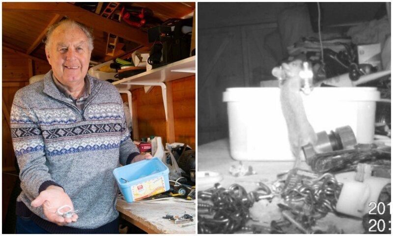Пенсионер гадал, кто убирается по ночам в сарае, пока не установил камеру наблюдения